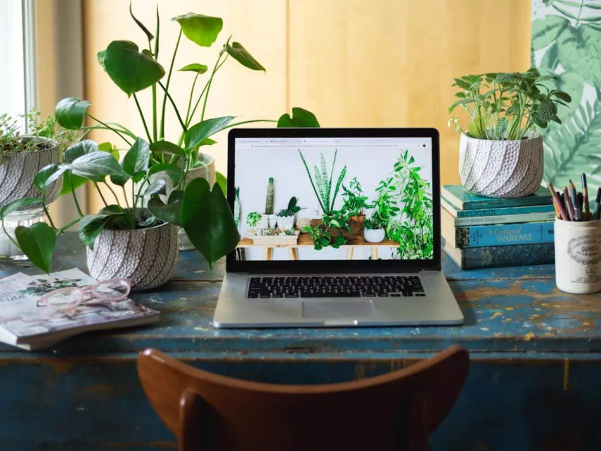 5 Plants that can also be your WFH buddies