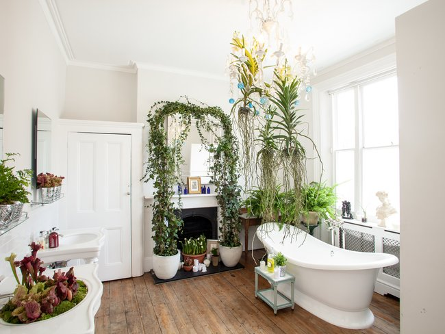 6 Houseplants that are well suited for bathrooms